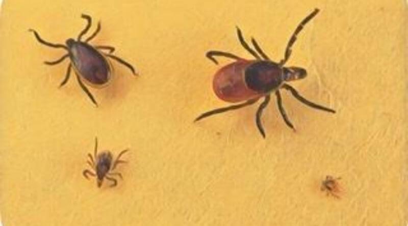 新型ブニヤウイルス 何 症状 原因 感染力 経路 中国